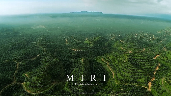 miri_plantation_2